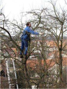 ako-strihať-strom