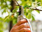 strihanie ovocneho stromčeku