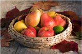 ako skladovať jablka a hrušky