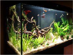 rybyčky v akváriu