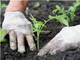 akú zeleninu sadiť v máji