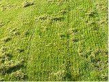 ako vertikutovať trávnik