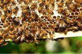 med od včelára