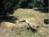 starý peň v záhrade