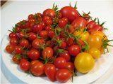 vysadzanie paradajok