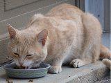 ako často krmiť mačku