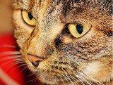 krmenie mačky