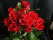 pekné červené ruže