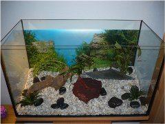 ako založiť akvárium