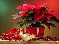 vianočna hviezda