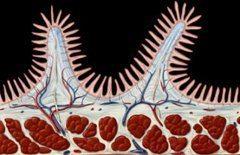 črevne klky