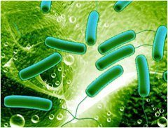 ako pomáhajú zdraviu probiotika