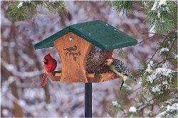 ako vyrobiť vtáčie kŕmidlá