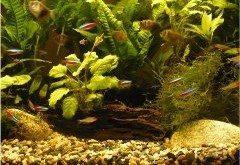 ako vyčistiť akvárium