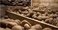 ako skladovať zemiaky
