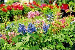 ako sa starať o trvalky na záhrade