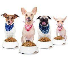 ako vybrať najlepšie krmivo pre psov