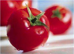 ako vyzerá pleseň na paradajkách