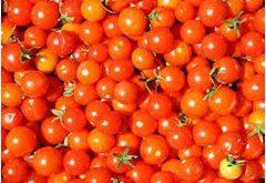 ako zvýšiť úrodu paradajok