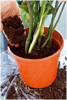 presádzanie izbových rastlín a zemina