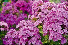 starostlivosť o kvety na záhrade