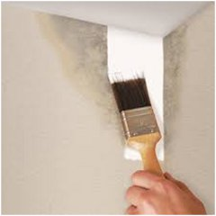Ako nanies protiples ov n ter ako a pre o for Mold resistant bathroom paint
