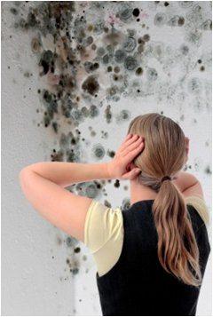 ako odstrániť pleseň na stene