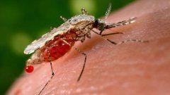 ako predísť malárii