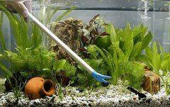 ako vyčistiť sladkovodné akvárium