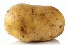 uchovávanie zemiakov počas zimy