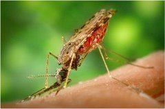 ako liečiť štípance od komárov
