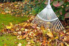 ako na opadané lístie na záhrade