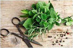 ako zbierať bylinky do kuchyne