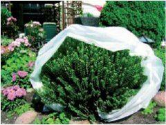 fólia ako ochrana na rastliny pred mrazom