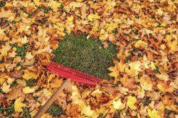 jesenné hrábanie záhrady