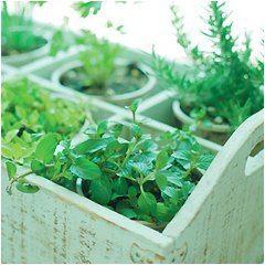 zbieranie a pestovanie byliniek