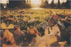 jeseň na záhrade a čo robiť