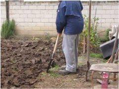 rýľovanie zahrady na jeseň