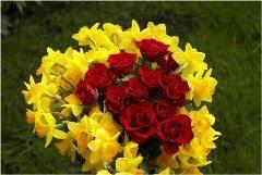 vysádzanie a pestovanie ruží