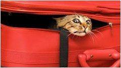 ako cestovať s mačkou