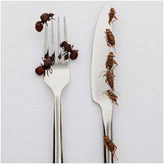 ako odstrániť hmyz z kuchyne