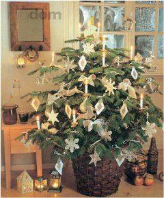 ako pestovať vianočný stromček v kvetináči
