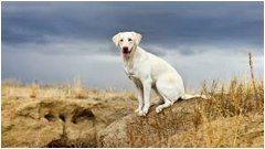 ako sa správne starať o psie labky