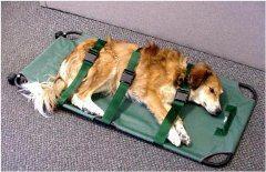 ako sa zachovať a čo robiť ked sa psovi stane úraz