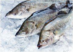 ako spoznať čerstvú rybu