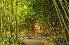 bambusárium