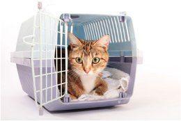 prepravka pre mačky
