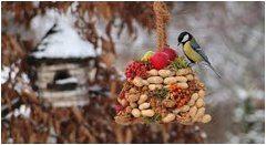 kŕmenie vtáčikov na záhrade v januári