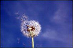 ako bojovať proti peľovej alergii