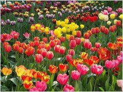 ako zoskupovať na záhrade kvety